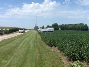 Kerr soybean plot