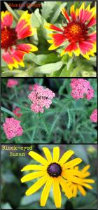 Flower Grouping
