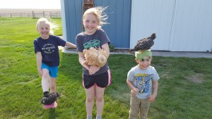 Johnson's 3 big kids with their chickens, Auto & Steer
