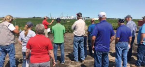 Visitors to Latham headquarters last fall for our field day saw replicated tests of Balance GT along with EnlistTM, Roundup Ready 2 Xtend® and LibertyLink® soybeans. Plots conducted by Latham's Research Team show there are good genetics to go with the Balance GT technology, so we're eager for full approval to make them available.