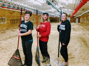 Teamwork makes the dream work! Wanda (in the center wearing the Iowa State sweatshirt) and her two full-time employees (Dawny is wearing the Wayne State shirt; Calley is wearing a Hawkeye shirt), who take care of the poults work together to prepare the brooder house for a new group. Bedding is delivered in large bales and then spread throughout the barn with a skid loader by James, the finishing manager at Cherry Lane Turkey Farm. Then Wanda and her team use lawn rakes to ensure the bedding depth is consistent throughout the entire house.