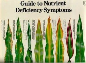 DeficiencySymptoms