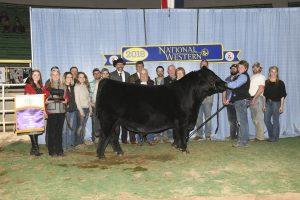 Photo 1 Bull