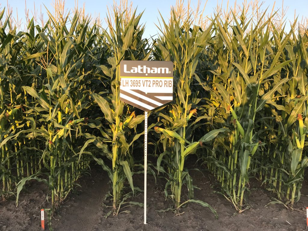 Hagart Latham Hi-Tech Corn Plot
