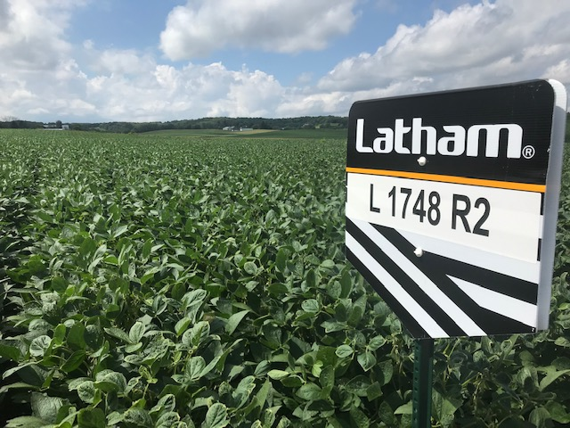 N Wisco Crop Report Latham Seeds 1748 R2 081419