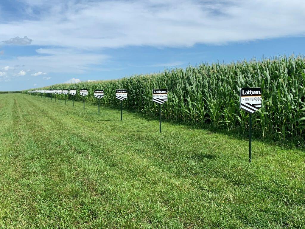 NW IA Latham Seeds Corn 8 13 19