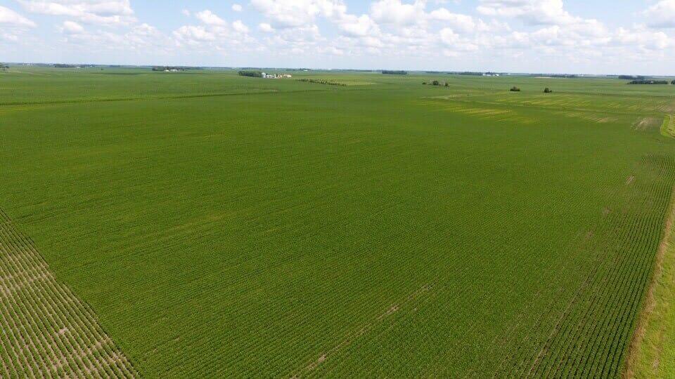 S MN Crop Report 081419