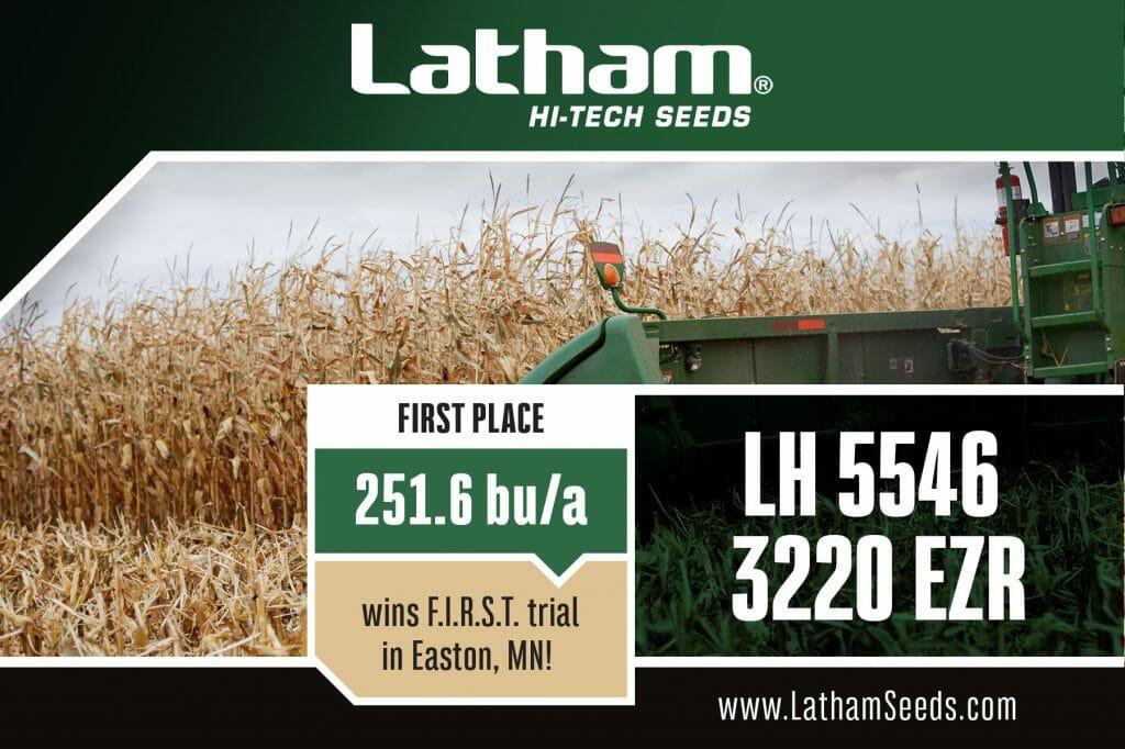 Harvesting Corn with Combine