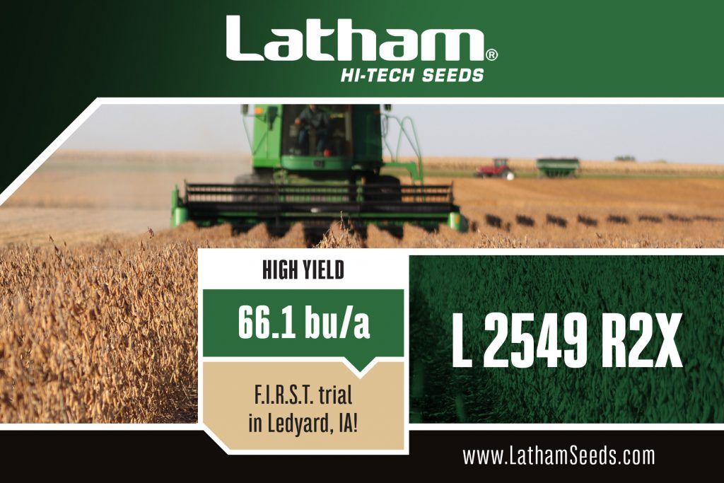 Harvesting of soybean field with combine
