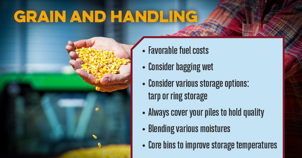 Grain and handling