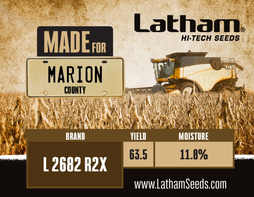 2682 marion graphic