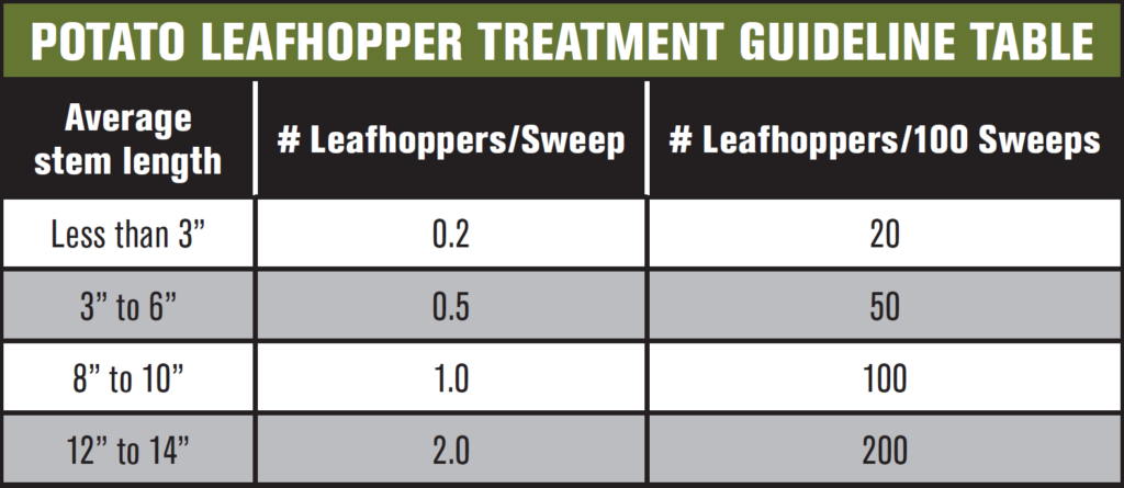 Leafhopper1